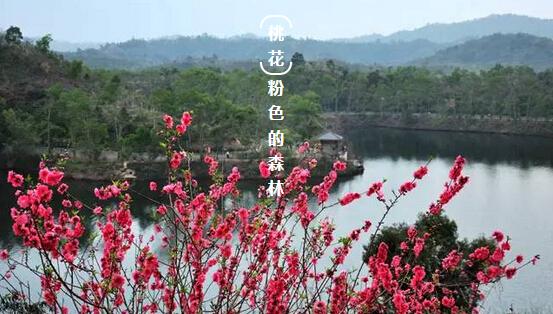 红花湖桃花岛位于红花湖景区中心位置,位置就在红花湖绿道入口第一个